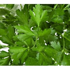 Parsley - Flat Leaf - 4 inch pot