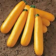 Squash - Yellow Zucchini - 4 inch pot