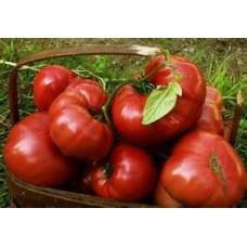 Tomatoes - Brandywine - 4 inch pot