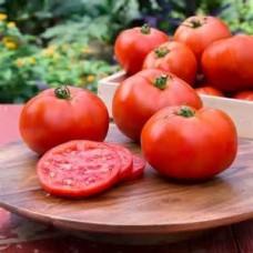 Tomatoes - Better Boy - 4 inch pot
