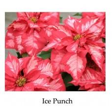 Poinsettia Ice Punch or White Glitter- regular, single