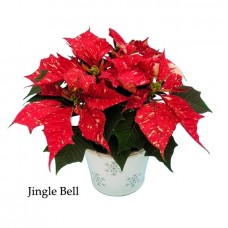 Poinsettia Jingle Bell - large, triple