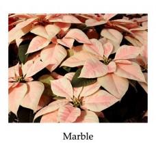 Poinsettia Marble - large, triple